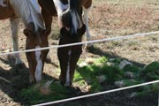Fodder simulates the benefits of fresh pasture for horses