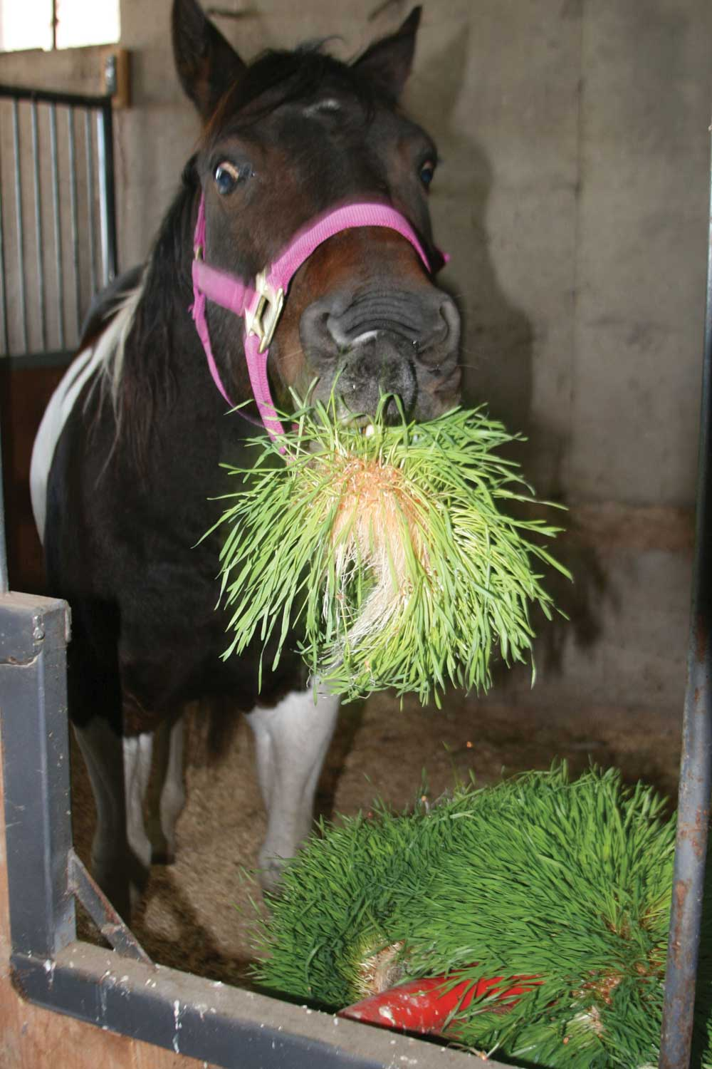 Equine Benefits Fodder Systems Healthy Fresh Feed