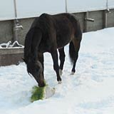 Hydroponic fodder makes it possible to provide green feed year round for horses.
