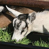 Increase the profitability of your livestock with fodder